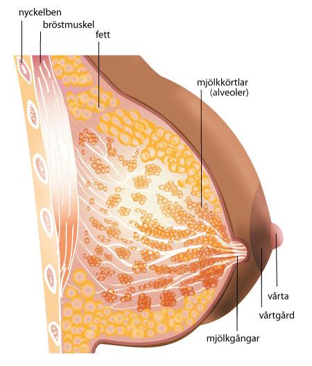 vårta på bröstet
